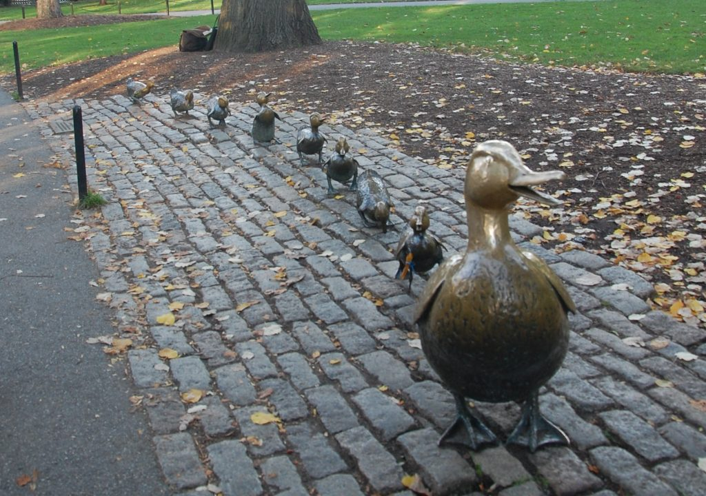 Boston Public Graden Ducks